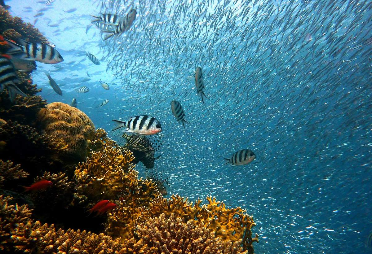 Plonger à Zanzibar : Nos conseils pratiques pour un séjour réussi