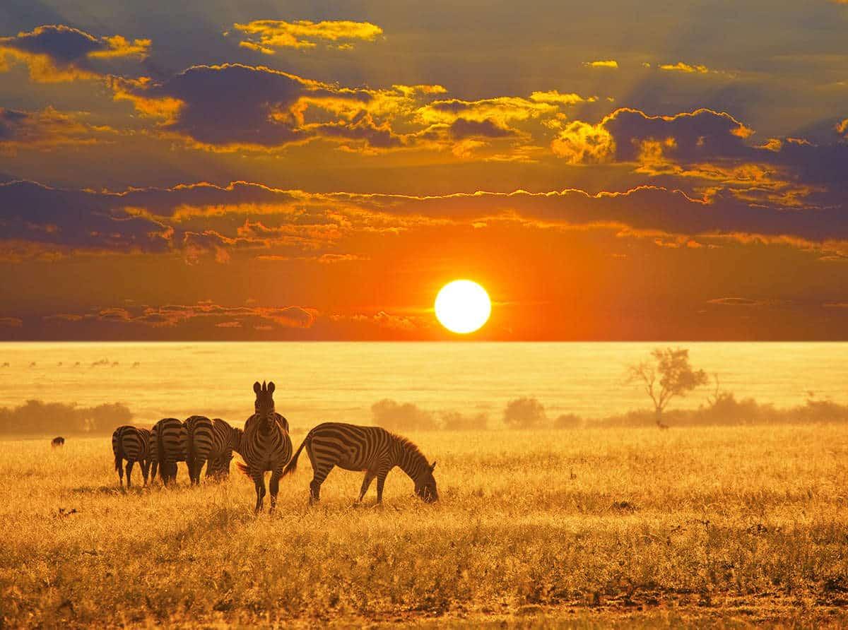Vivre une expérience hors du commun le temps d'un safari en Namibie