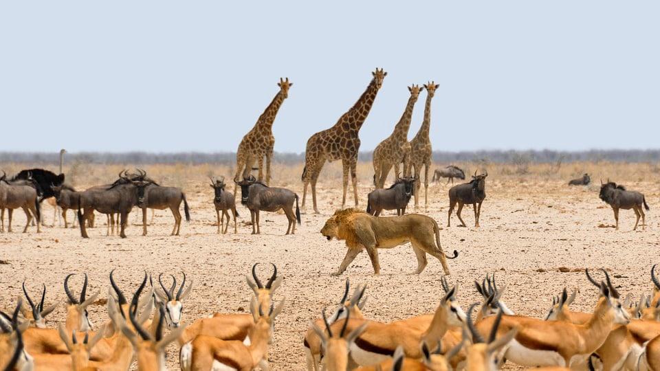 Voyage en Namibie, les adresses intéressantes à retenir