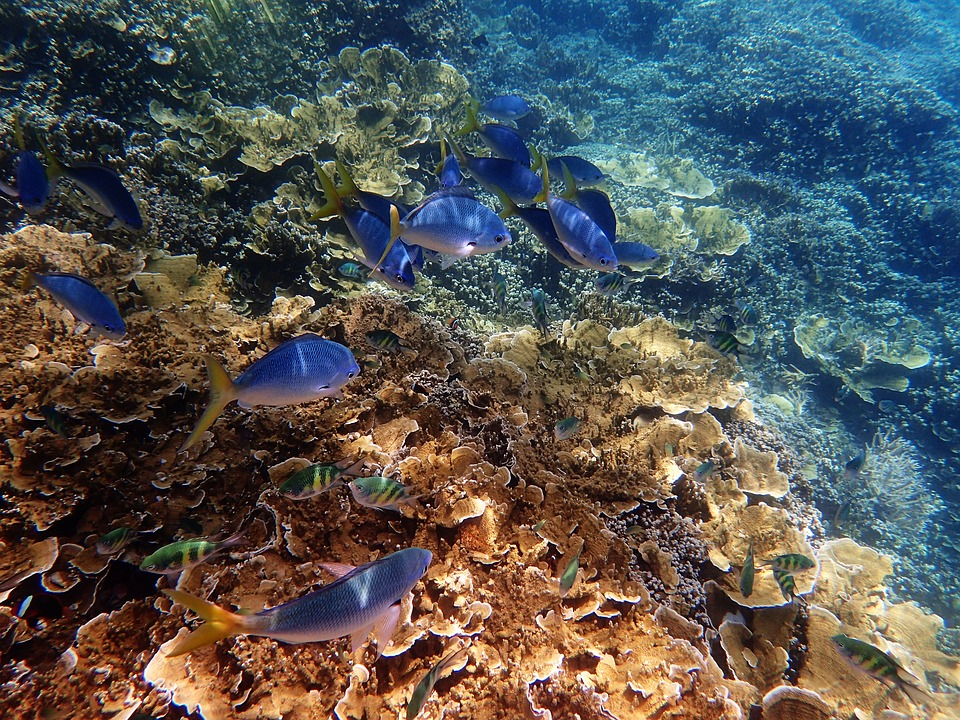 Fonds sous-marins Corse