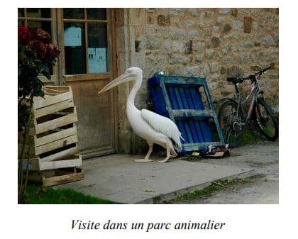 Parc animalier et botanique de Branféré, Sud de la Bretagne