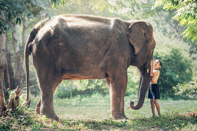 Refuge des éléphants