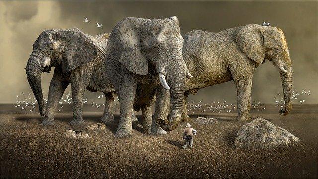 Les 12 sanctuaires et refuges d'éléphants éthiques (respect des animaux)