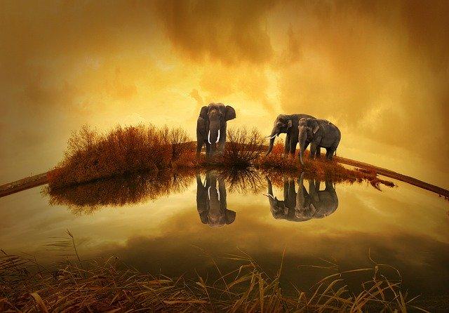 Parc de reserve des éléphants