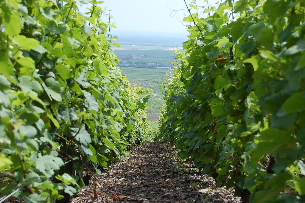 Les 15 meilleures activités à faire à Chalons en Champagne (en 2020)