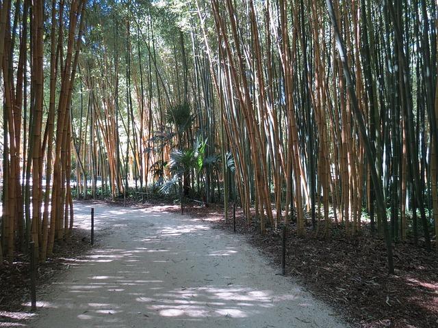 jardin Bambouseraie Anduze