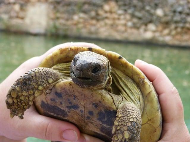 Zoo en Corse
