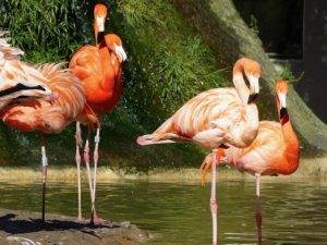 Meilleures zoos et aquariums en France